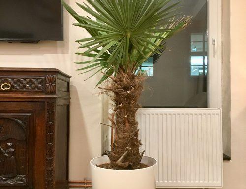 Die Palme ist im Wohnzimmer angekommen: